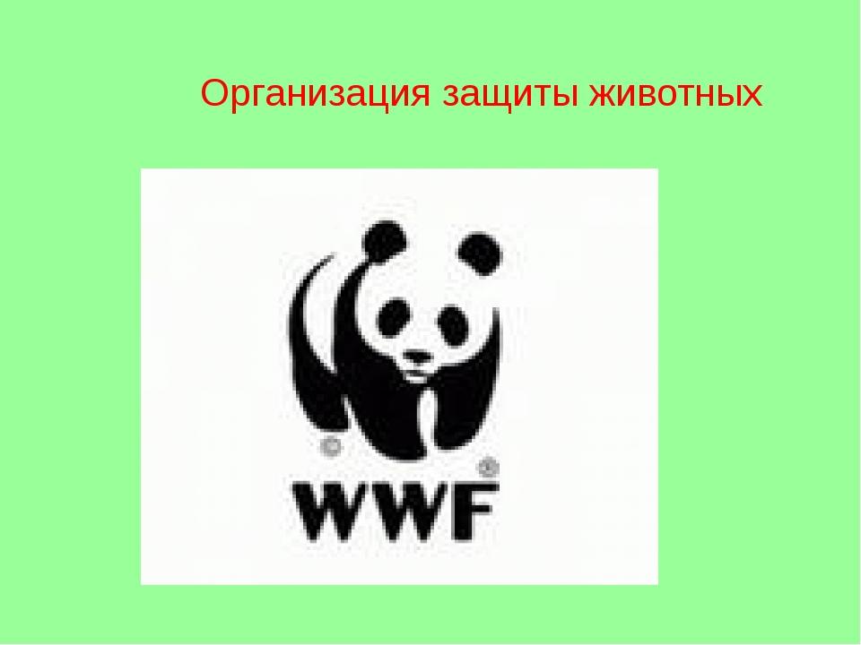 Организация защиты животных