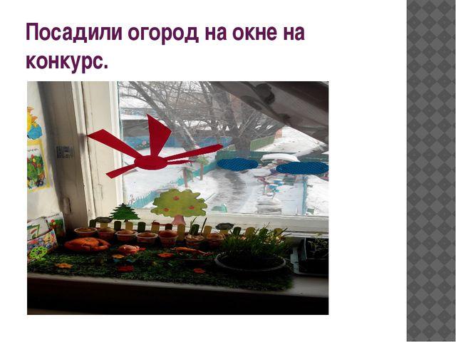 Посадили огород на окне на конкурс.