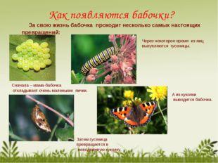 Как появляются бабочки? За свою жизнь бабочка проходит несколько самых настоя