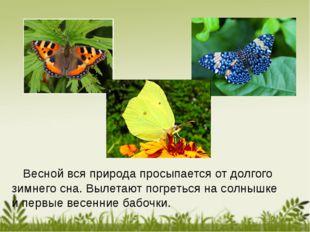 Весной вся природа просыпается от долгого зимнего сна. Вылетают погреться на
