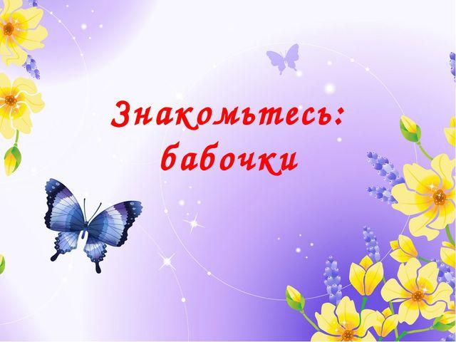 Знакомьтесь: бабочки