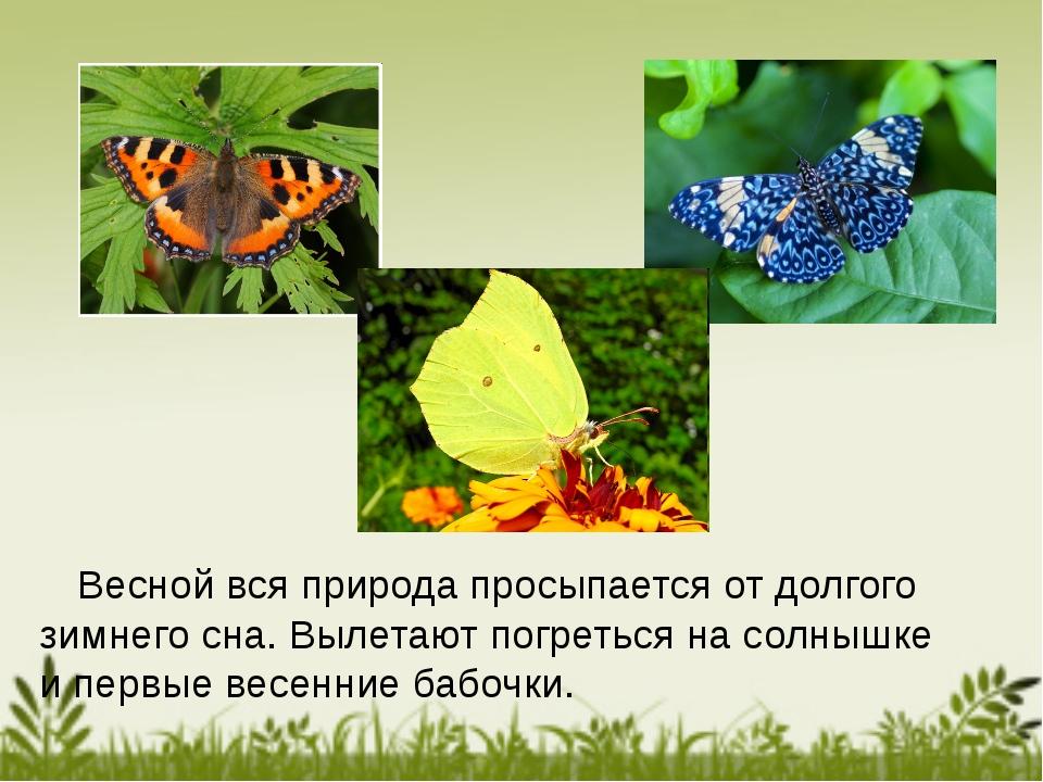 Весной вся природа просыпается от долгого зимнего сна. Вылетают погреться на...