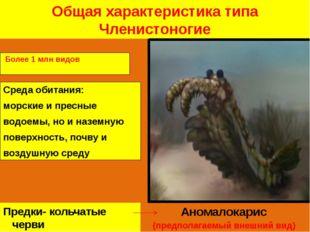 Общая характеристика типа Членистоногие Среда обитания: морские и пресные вод