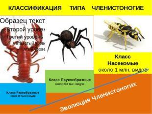 Класс Паукообразные около 63 тыс. видов Класс Ракообразные около 35 тысяч вид