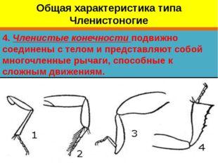 4. Членистые конечности подвижно соединены с телом и представляют собой много