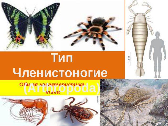 Общая характеристика типа Тип Членистоногие (Arthropoda)