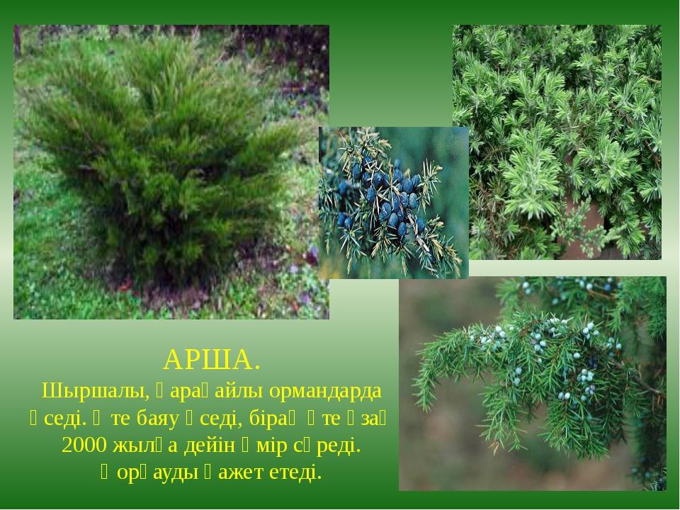 АРША. Шыршалы, қарағайлы ормандарда өседі. Өте баяу өседі, бірақ өте ұзақ 200...