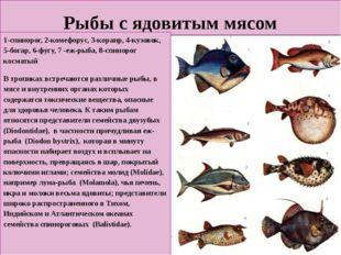Рыбы с ядовитым мясом 1-спинорог, 2-комефорус, 3-коранр, 4-кузовок, 5-богар,