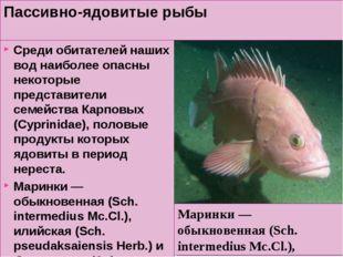 Пассивно-ядовитые рыбы Среди обитателей наших вод наиболее опасны некоторые п
