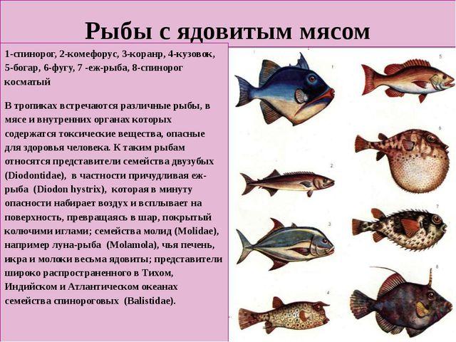 Рыбы с ядовитым мясом 1-спинорог, 2-комефорус, 3-коранр, 4-кузовок, 5-богар,...