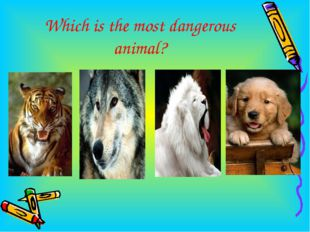 Which is the most dangerous animal?