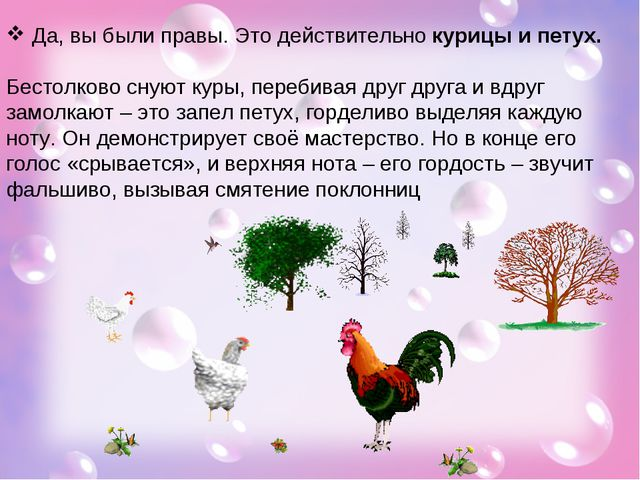 Да, вы были правы. Это действительно курицы и петух. Бестолково снуют куры,...