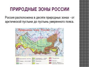 ПРИРОДНЫЕ ЗОНЫ РОССИИ Россия расположена в десяти природных зонах - от арктич