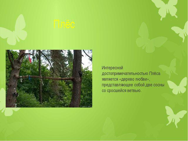 Плёс Интересной достопримечательностью Плёса является «дерево любви», предст...