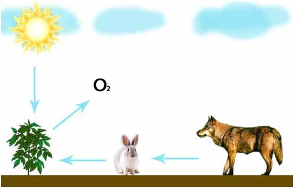 Биология - наука о живой природе. Разнообразие живых организмов и среда их обитания