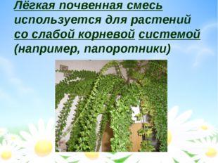 Лёгкая почвенная смесь используется для растений со слабой корневой системой
