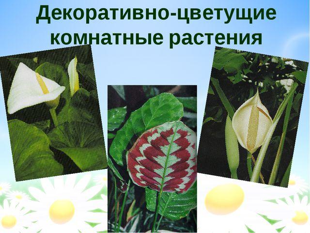 Декоративно-цветущие комнатные растения
