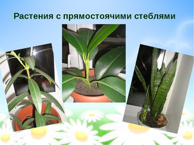 Растения с прямостоячими стеблями