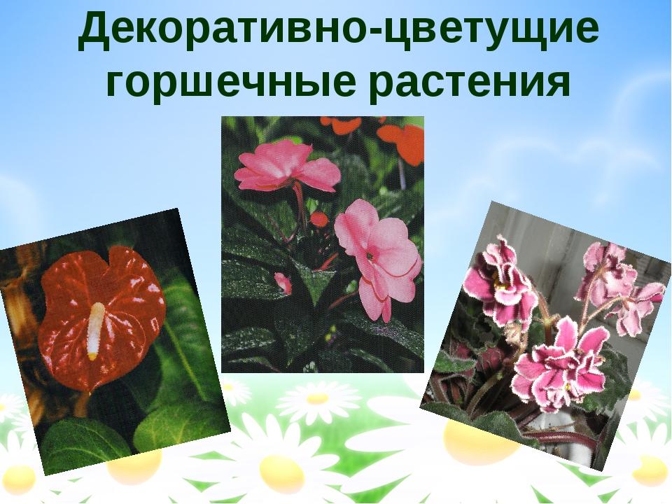 Декоративно-цветущие горшечные растения