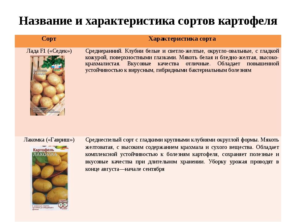 Картофель Мамба