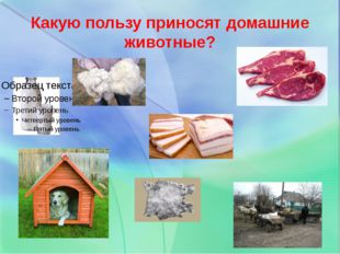 Какую пользу приносят домашние животные?