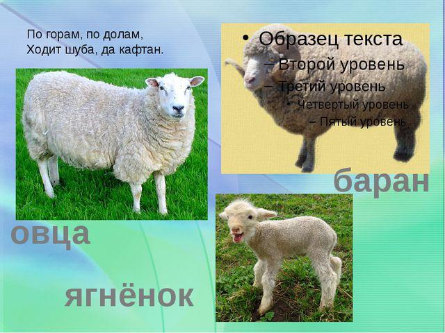 По горам, по долам, Ходит шуба, да кафтан. овца баран ягнёнок
