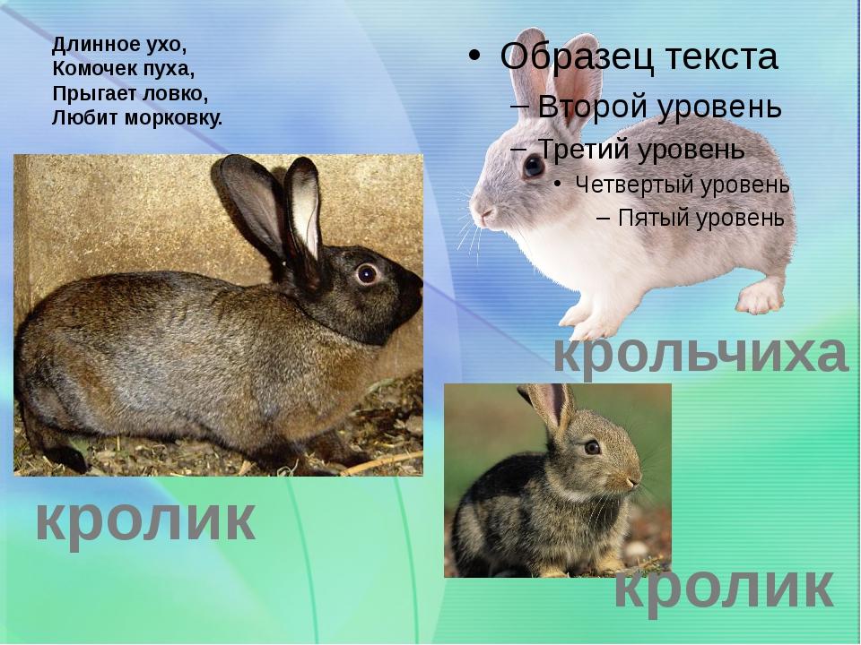Длинное ухо, Комочек пуха, Прыгает ловко, Любит морковку. крольчиха кролик кр...