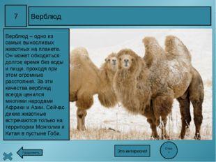 17 «Голубые глаза России» Ответ Ладожское и Онежское озёра – крупные озёра н