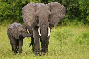 http://i.livescience.com/images/i/000/036/988/iFF/elephants.jpg?1361473184