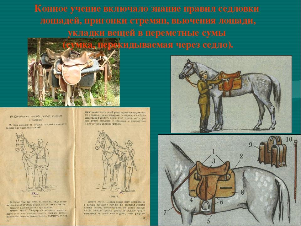 Конное учение включало знание правил седловки лошадей, пригонки стремян, вьюч...