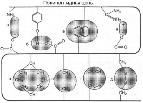 http://www.xumuk.ru/biologhim/bio/img128.jpg