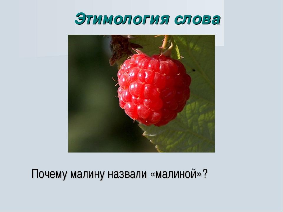 Почему малину назвали «малиной»? Этимология слова