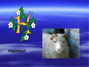 Hammel