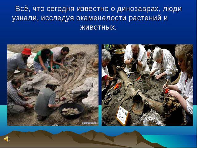 Всё, что сегодня известно о динозаврах, люди узнали, исследуя окаменелости ра...
