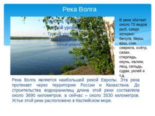 Река Волга Река Волга является наибольшей рекой Европы. Эта река протекает че