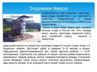 Эндемики Амура Царь-рыба калуга из семейства осетровых водится только в реке