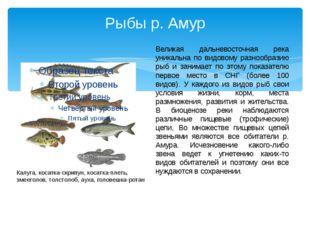 Рыбы р. Амур Великая дальневосточная река уникальна по видовому разнообразию