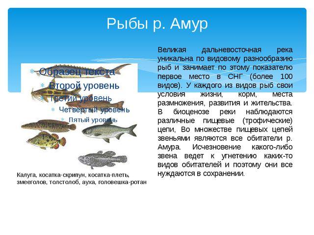 Рыбы р. Амур Великая дальневосточная река уникальна по видовому разнообразию...