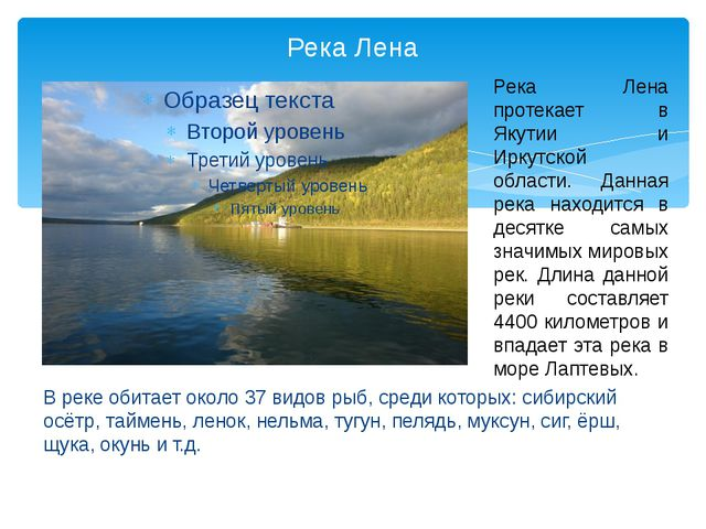 Река Лена В реке обитает около 37 видов рыб, среди которых: сибирский осётр,...