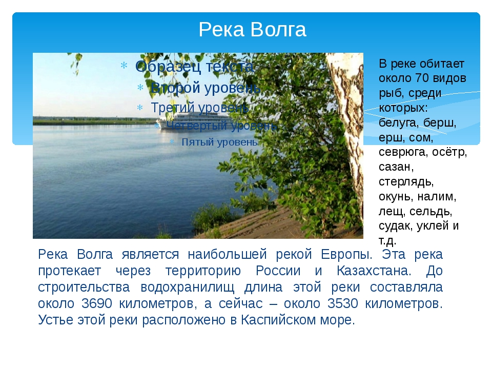 Река Волга Река Волга является наибольшей рекой Европы. Эта река протекает че...
