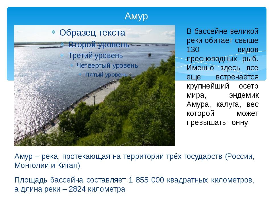 Амур Амур – река, протекающая на территории трёх государств (России, Монголии...