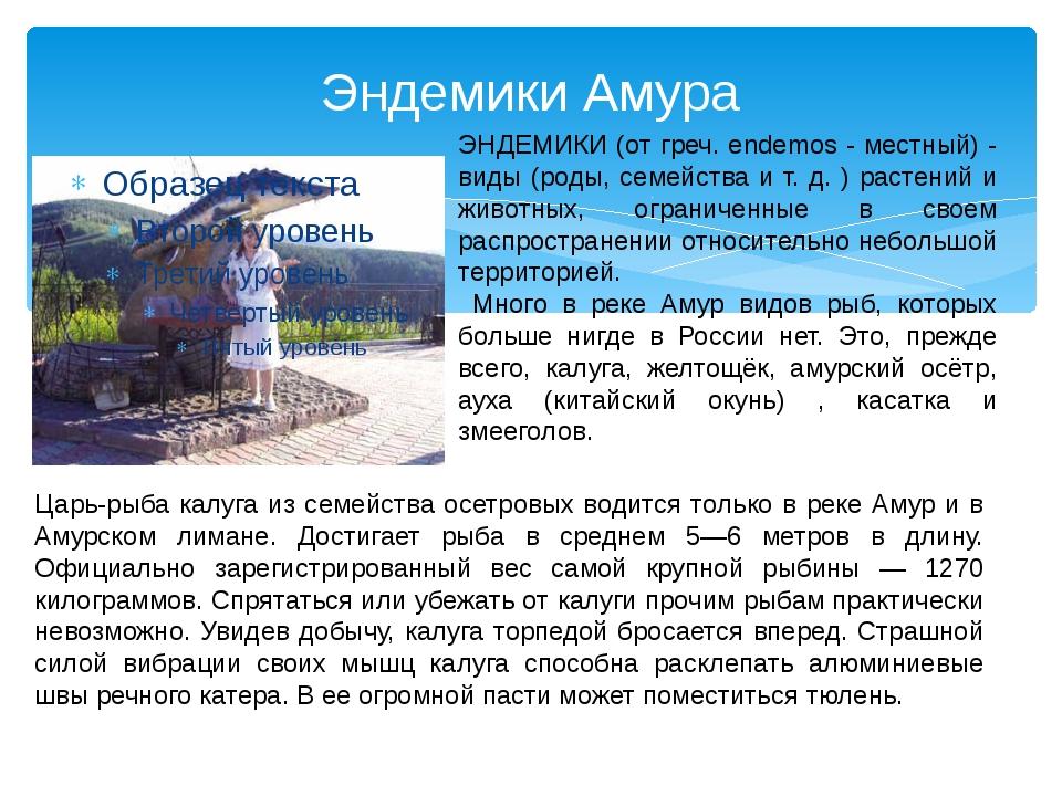 Эндемики Амура Царь-рыба калуга из семейства осетровых водится только в реке...