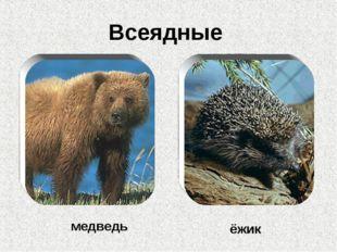 Всеядные медведь ёжик
