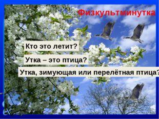 Кто это летит? Утка – это птица? Утка, зимующая или перелётная птица? Физкуль