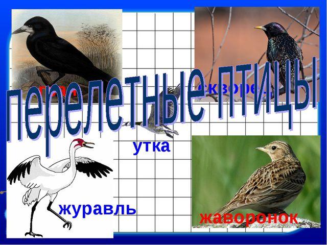 грач скворец жаворонок журавль утка