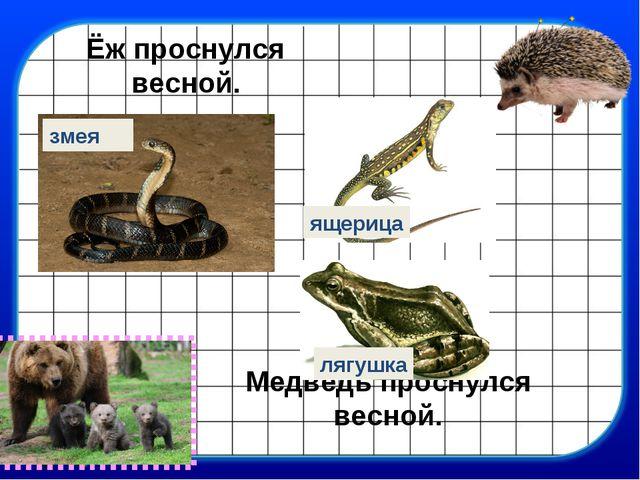 Медведь проснулся весной. Ёж проснулся весной. змея ящерица лягушка