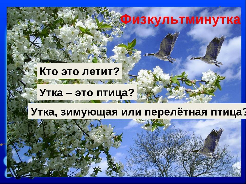 Кто это летит? Утка – это птица? Утка, зимующая или перелётная птица? Физкуль...