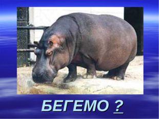 БЕГЕМО ?