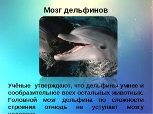 Мозг дельфинов Учёные утверждают, что дельфины умнее и сообразительнее всех о