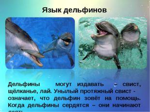 Язык дельфинов Дельфины могут издавать – свист, щёлканье, лай. Унылый протяжн